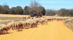 Animals on the camino
